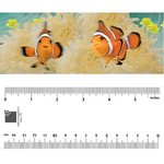 Bookmark - Clownfish