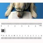 Bookmark - Reading Dog