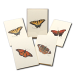 Butterfly Assortment