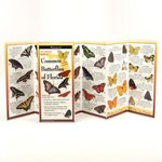 Common Butterflies of Florida