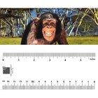 Bookmark - Chimpanzee