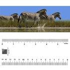 Bookmark - Zebras