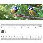 Bookmark - Blue Tit Birds