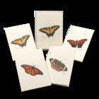 Butterfly Assortment