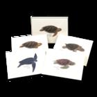 Sea Turtle Assortment NC-18